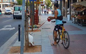 perro-bici